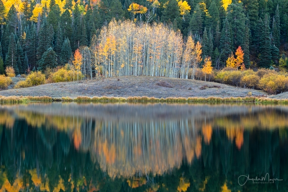 Clear Lake Aspens Reflection_DSC7075_WEB
