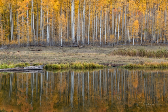 Clear Lake Reflections_DSC7105_WEB
