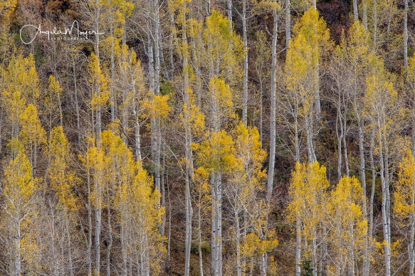 Long View Aspens_DSC6950_WEB
