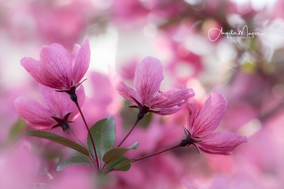 Blossom Trio_NIK1997_WEB