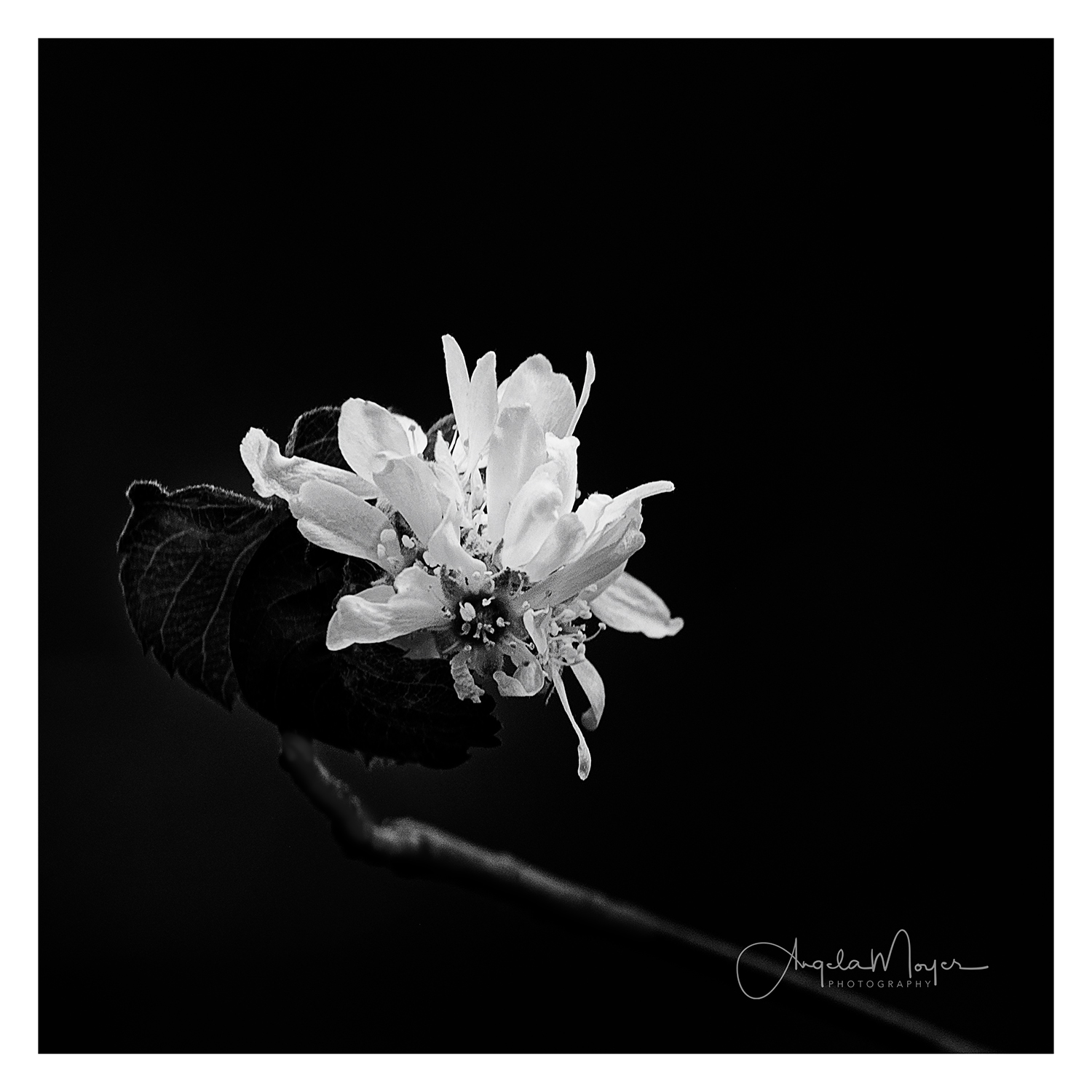 Flower B&W square_DSC4108-2-Edit_WEB