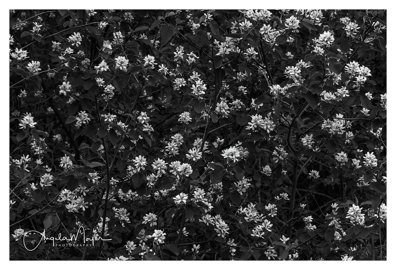 Flower Cluster_DSC4213-2_WEB