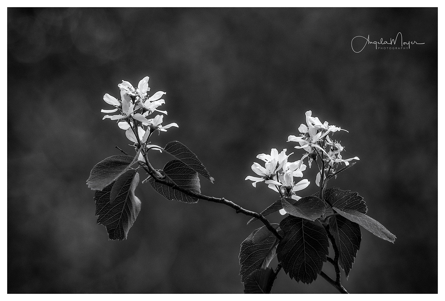 Flowers B&W_DSC4190-2_WEB